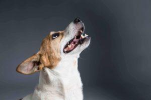מזון לכלבים מבוגרים מכיל ויטמינים ותוספים נחוצים לגיל השלישי