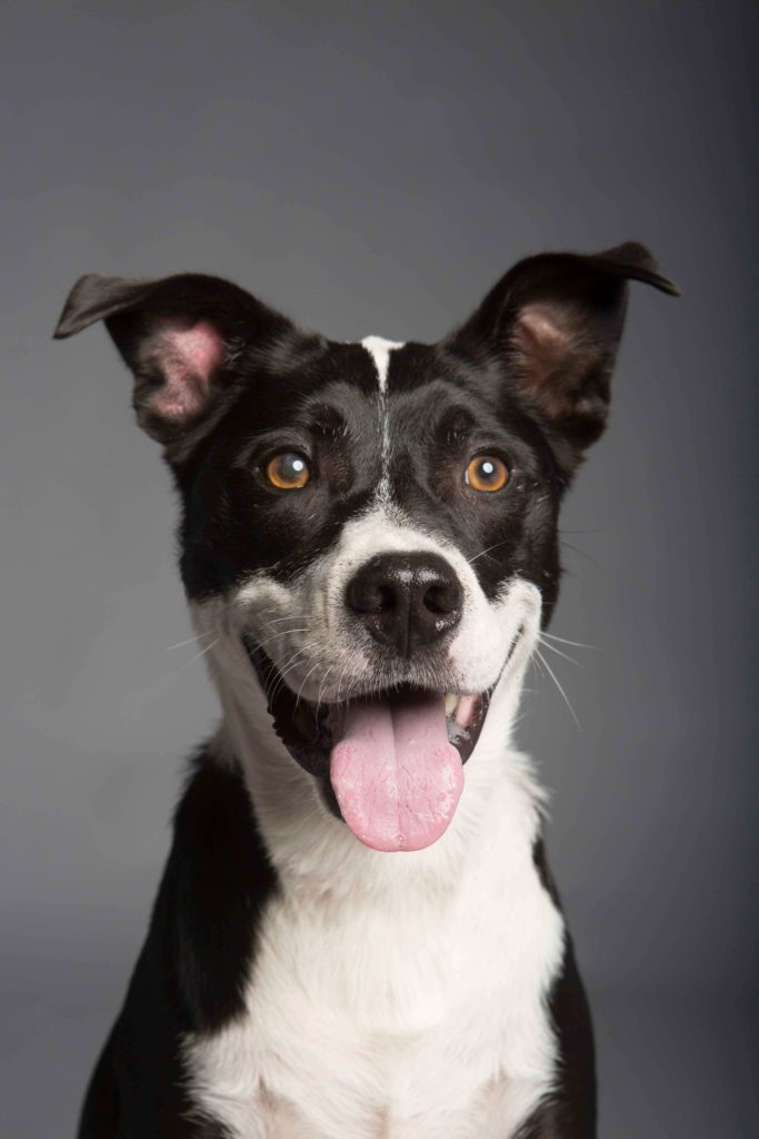 אוכל לכלבים בוגרים עם תפריט מותאם לצרי הכלב - סולמייט